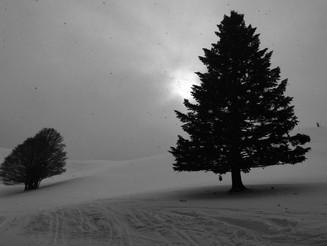 Féérie neigeuse