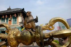 26-Le singe de Swayambhu.jpg