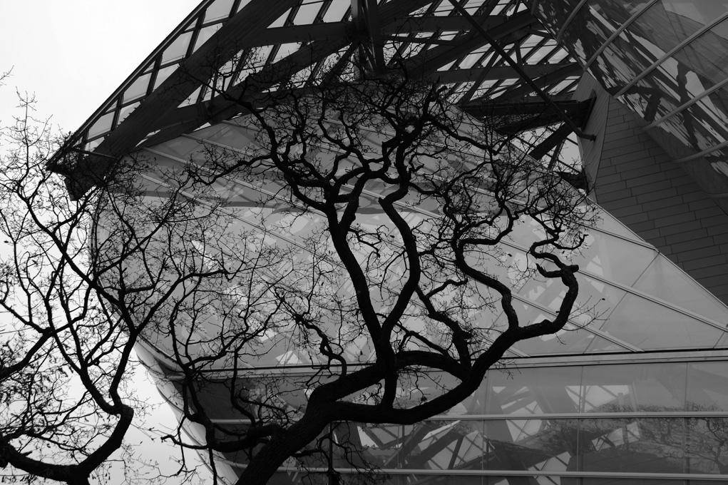 ©AR-1-L'arbre Vuitton
