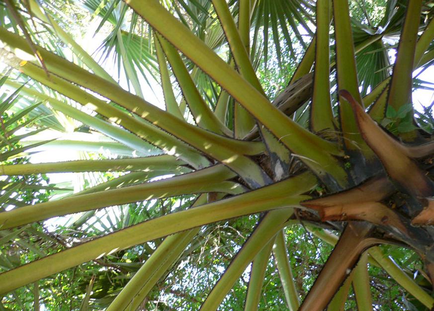 KH-végétation01.jpg