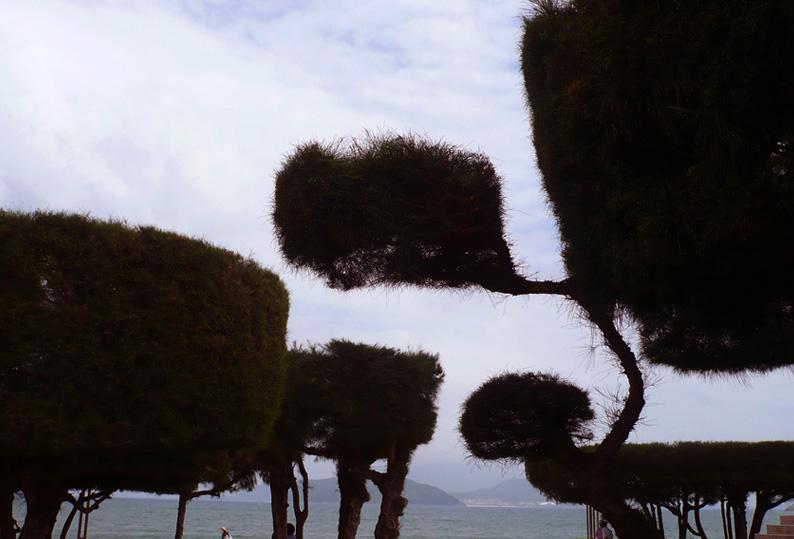 Viet07-Nha Trang-19trees.jpg