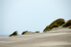 6-Bercq-sur-mer-331-dunes.jpg