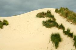 8-Bercq-sur-mer-458-dunes.jpg