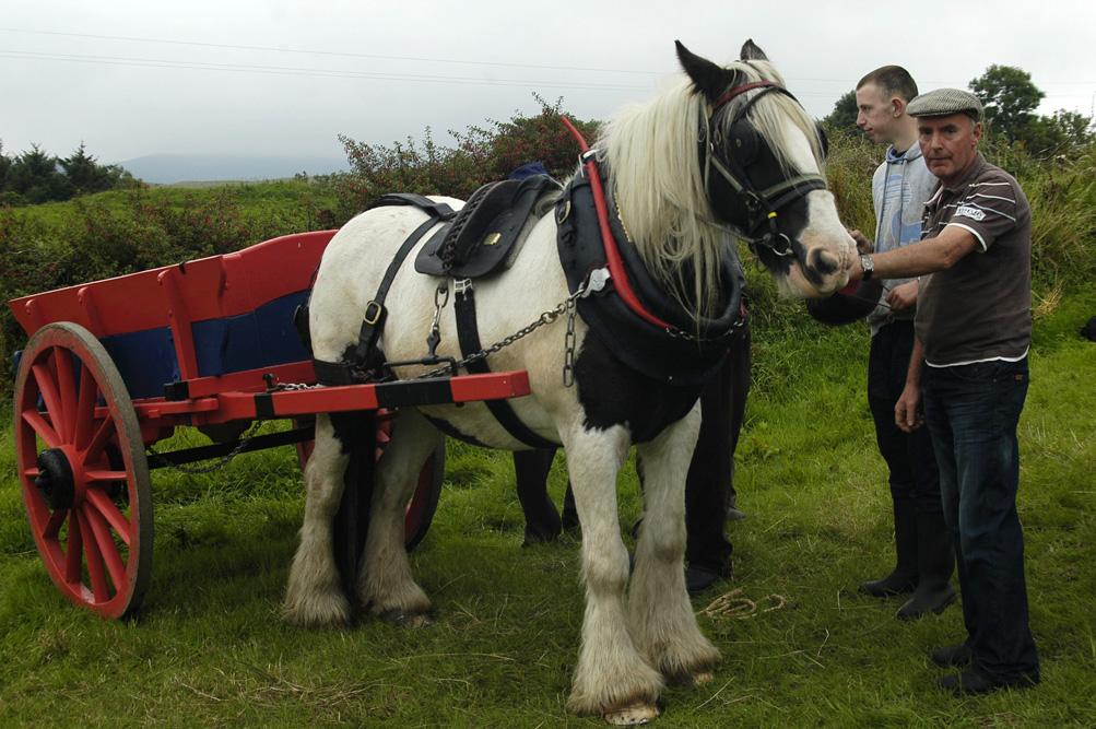 ©Antoine_Roulet-Ireland-290-cheval