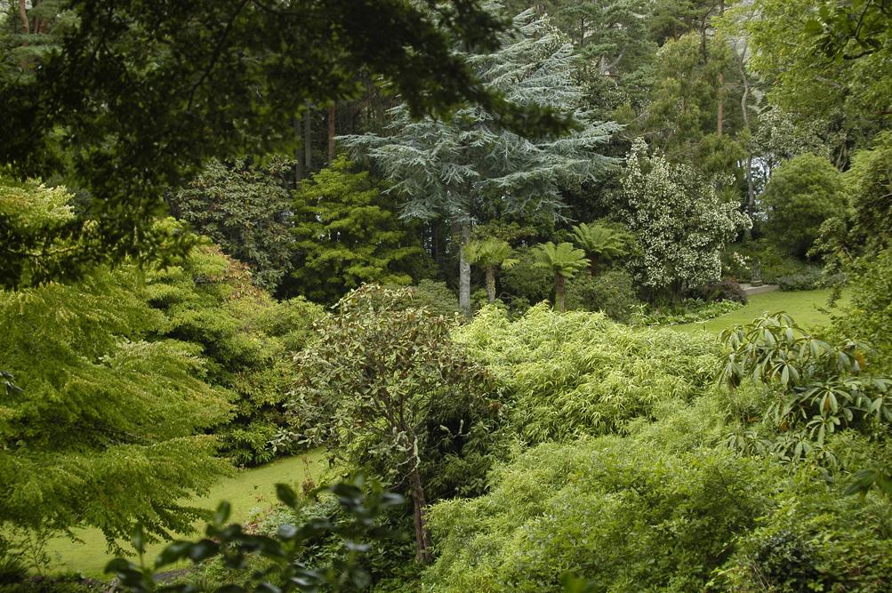 ©Antoine Roulet-Ireland-végétation