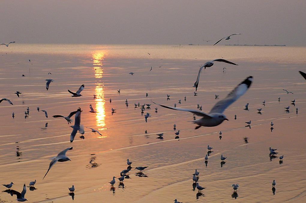 Antoine Roulet-Thailand-Birds sunset.jpg