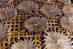 Antoine Roulet-Thailande-dryfishes.jpg