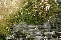 ©Antoine Roulet-Ireland-fleurs-muret