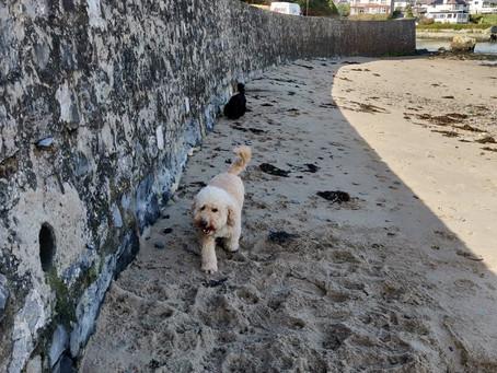 Beach Walks with Dexter & Delilah , nobody else around, just us 😍