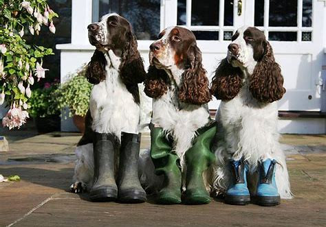 hairy hounds.boots