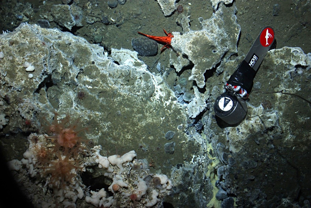 Deep Sea Drop Camera seabed image 2