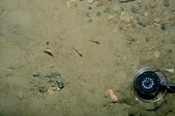 Deep Sea Drop Camera seabed image