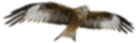 red-kite-3070295_edited.png