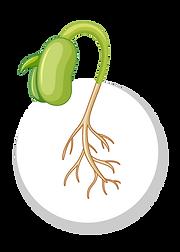 crecimiento interespecies-03.png
