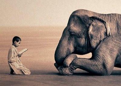 Humanos y animales