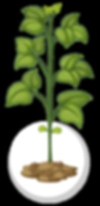crecimiento interespecies-05.png