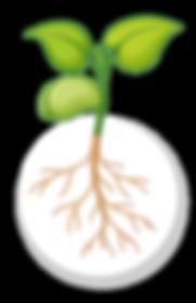 crecimiento interespecies-04.png