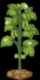 crecimiento interespecies-06.png