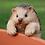Thumbnail: Pot Hanging Hedgehog