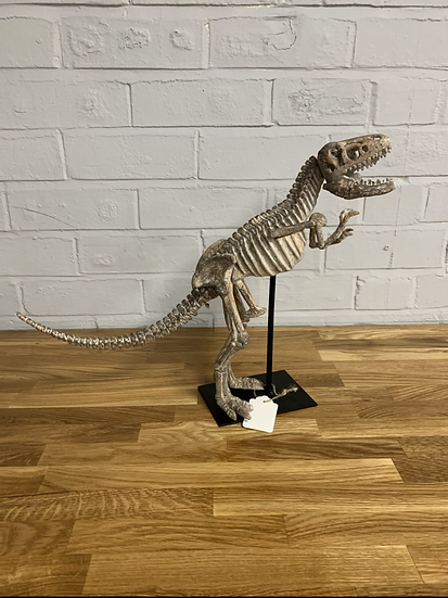Dinosaur Skeleton on Stand