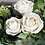 Thumbnail: Dried Flowers