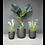 Thumbnail: Set of 3 Planters
