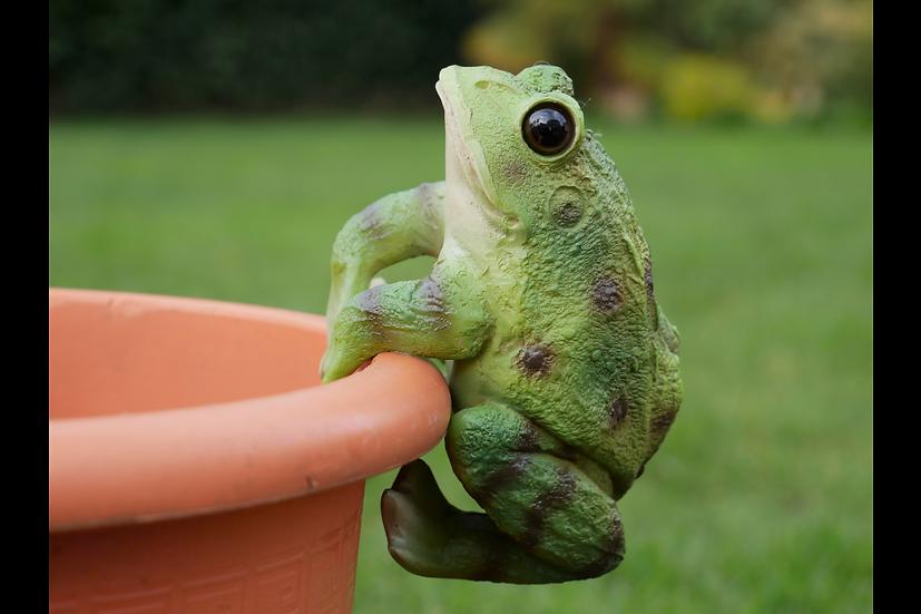 Pot Hanging Frog