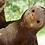 Thumbnail: Climbing Sloth