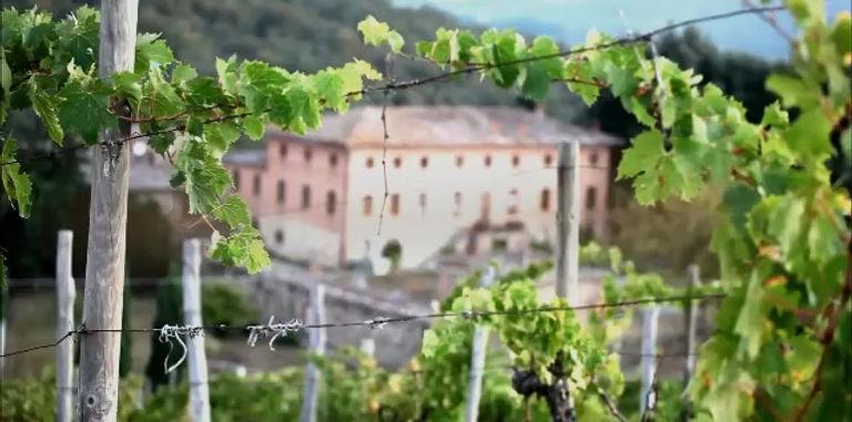 Selvole, le vigne e agriturismo