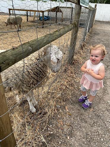 Olivia with sheep.jpg