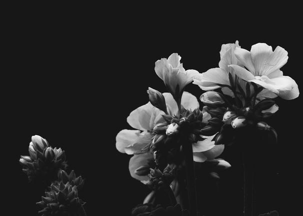 © Jo Brent Photography