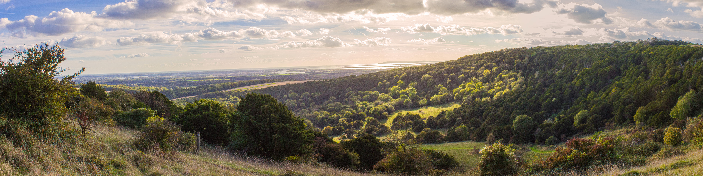 Kingley Vale