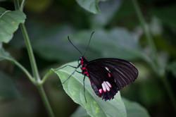 Butterfly World-162