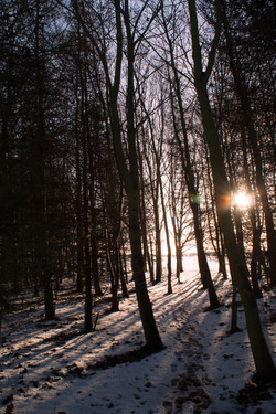 trees in the winter light