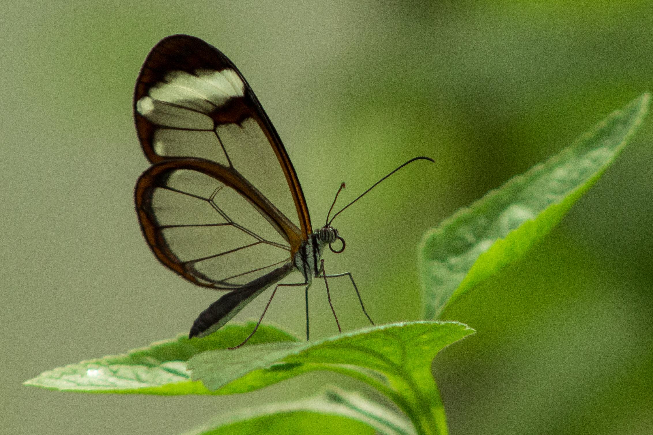 butterflies-1