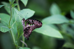 Butterfly World-82