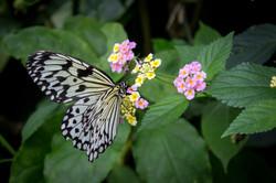 Butterfly World-98