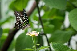 Butterfly World-57