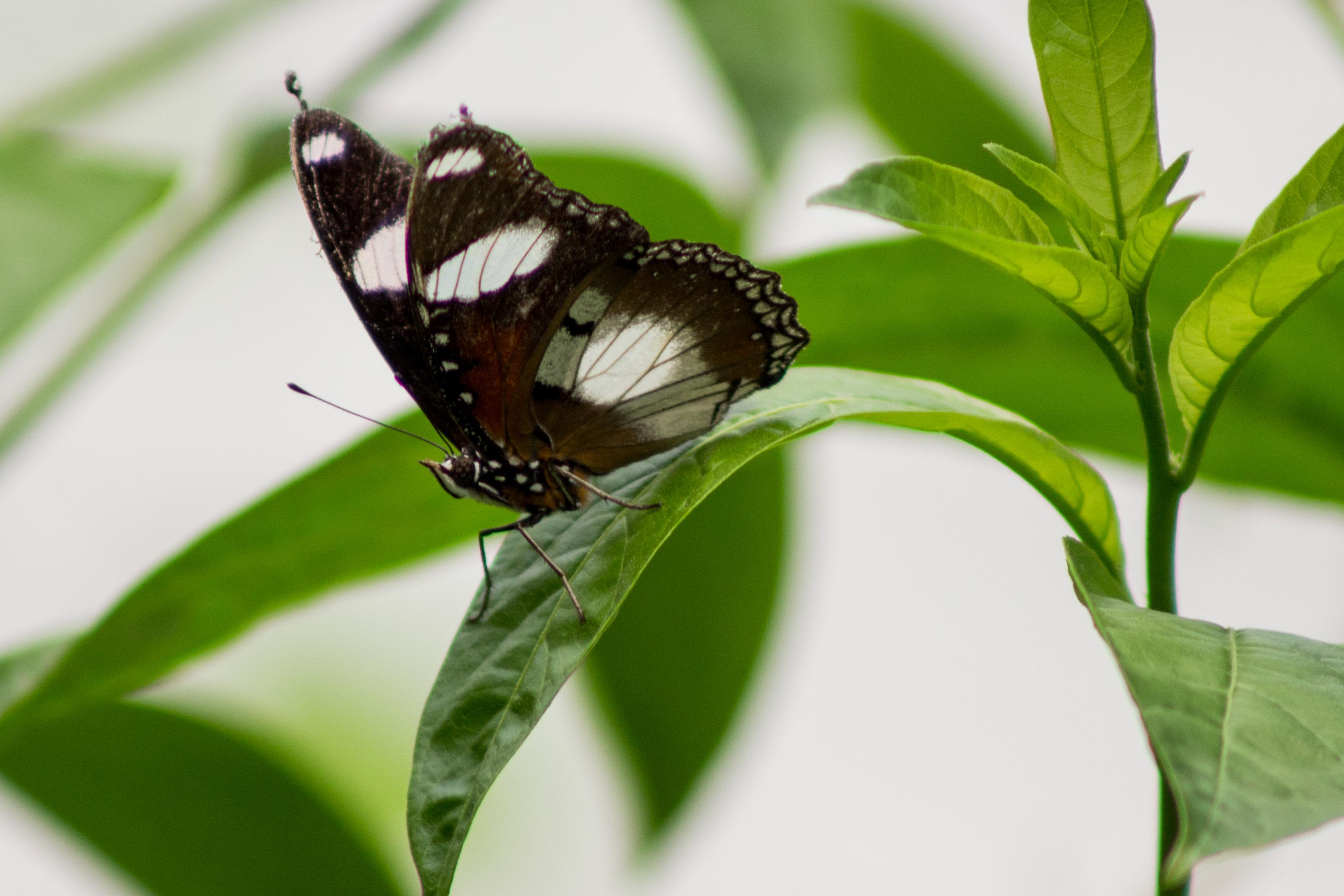 butterflies-7
