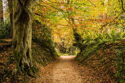 Belsay Hall wood in Autumn