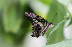Butterfly World-181