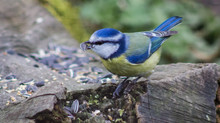 Assignment of the week: 'Birds'