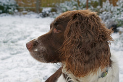 Molly in the Snow