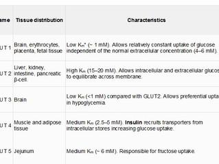 Glucose transporters