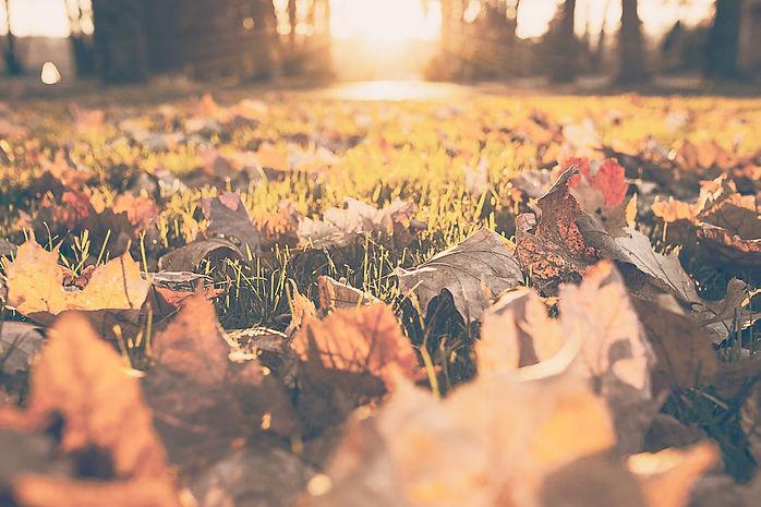 Fall%20Foliage_edited.jpg