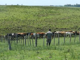 Patrulha Rural em dois dias de operação recupera animais furtados