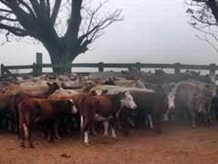 Crime no campo: recuperação de gado furtado e roubo a estabelecimento rural