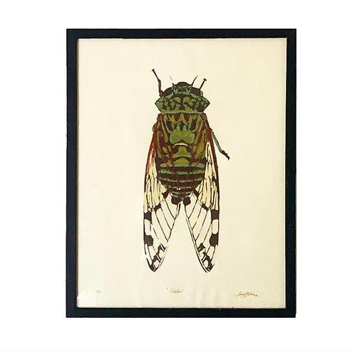 """Cicada, 22x28"""""""