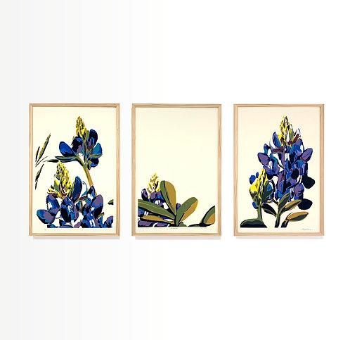 "Bluebonnet Triptych 30x60"""