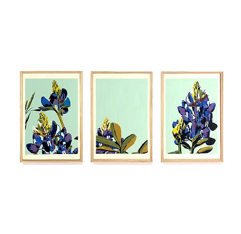 "Bluebonnet Triptych, 30x60"""